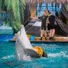 Дельфинарии, океанариумы в Мензелинске