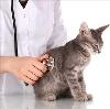 Ветеринарные клиники в Мензелинске